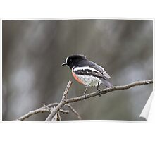Scarlet Robin at the You Yangs Poster
