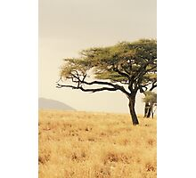 Leopard in a Tree Photographic Print