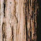 Petrified Wood - a study. by strangerandfict