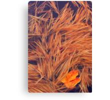 Leaf & Pine Needles Canvas Print