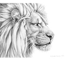 Lion G006 by schukina Photographic Print