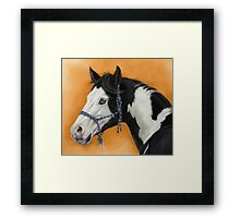 American Paint Horse P054 by schukina Framed Print