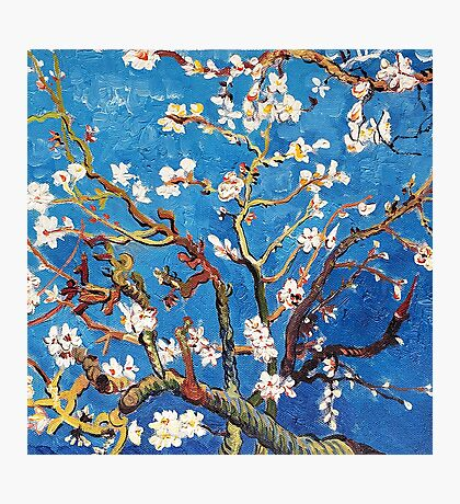 Branches of an Almond Tree in Blossom Photographic Print