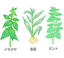 Plants with Japanese Labels Photographic Print