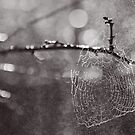 WEB by Bloom by Sam Wales