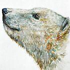 Polar bear by LauraMSS