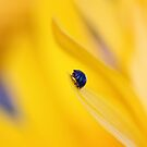 LADYBIRD by Bloom by Sam Wales