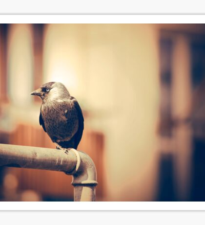 Black bird sitting on the metal pipe. Vintage sepia colors Sticker