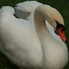 Swan by 2Herzen