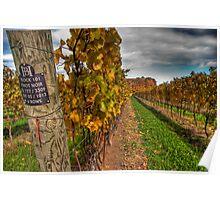 Sideways View of Pinot Noir Vineyard Poster