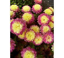 Cheerful flowers chrysanthemums Photographic Print