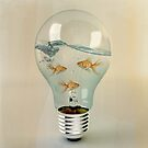 ideas and goldfish 02 by vinpez