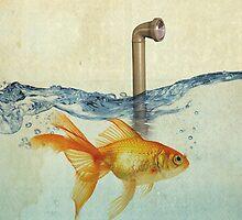 periscope goldfish by vinpez
