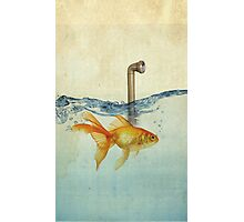 periscope goldfish Photographic Print