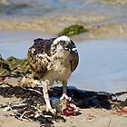 Wild Osprey with fish on beach by mncphotography