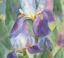 Irises by torishaa