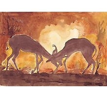 Territorial Dance in the African sunset Photographic Print