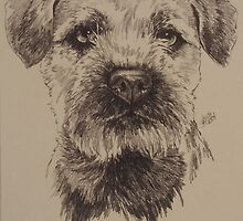 Border Terrier by BarbBarcikKeith