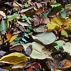 Fallen Leaves by Kathryn Jones