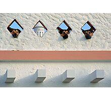 Algarve Dogs Photographic Print