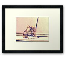 Retro Kitten Photo 3 Framed Print