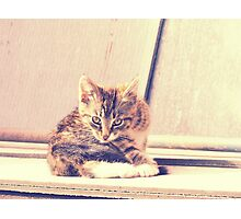 Retro Kitten Photo 3 Photographic Print