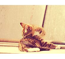 Retro Kitten Photo 4 Photographic Print