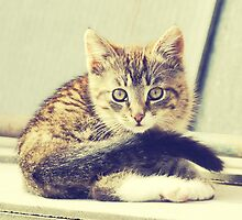 Retro Kitten Photo 5 by AnnArtshock