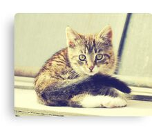 Retro Kitten Photo 5 Canvas Print