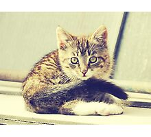 Retro Kitten Photo 5 Photographic Print