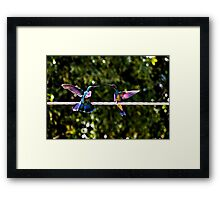 Hummer Face-Off Watercolor Framed Print
