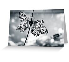 Black & White Butterflies Greeting Card