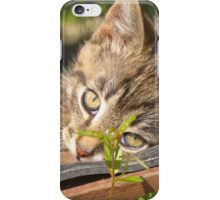 Striped kitten 2 iPhone Case/Skin