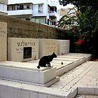 Black cat or white cat... by Segalili