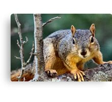 I work for peanuts!  :) Canvas Print
