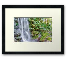 Tropical Garden Framed Print