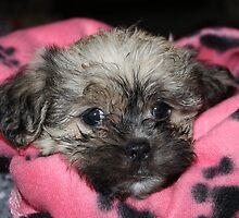 Please Meet Little Roxy by AnnDixon