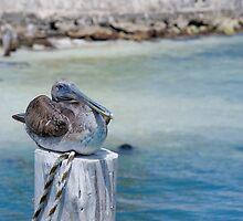 Pelican Bay by randymir