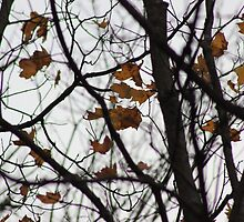 Last Leaves by Vicki Spindler (VHS Photography)