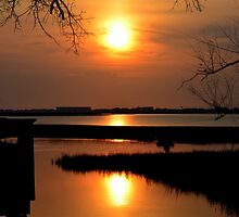 Sunset Silhouette by Kathy Baccari