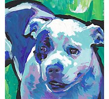 staffordshire Bull Terrier Bright colorful pop dog art Photographic Print