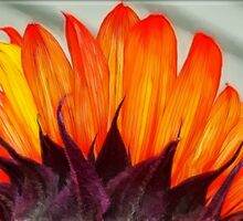 Sunshine Petals by Tracy Deptuck