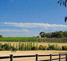 The Vineyard On The Hill by metriognome