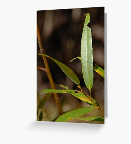 Autumn Willow Greeting Card