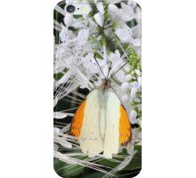 Great Orange Tip Butterfly iPhone Case/Skin