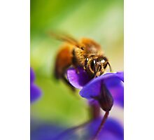 South Beach Bee Photographic Print