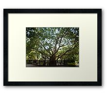 Where Life Begins Framed Print