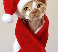 Christmas Heartly by SandraVee
