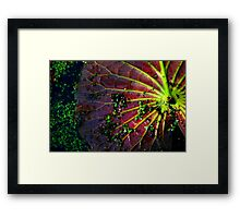 Cypress Swamp Lily Pad Framed Print