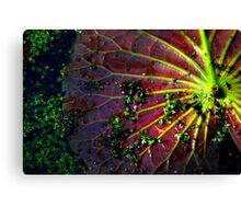 Cypress Swamp Lily Pad Canvas Print